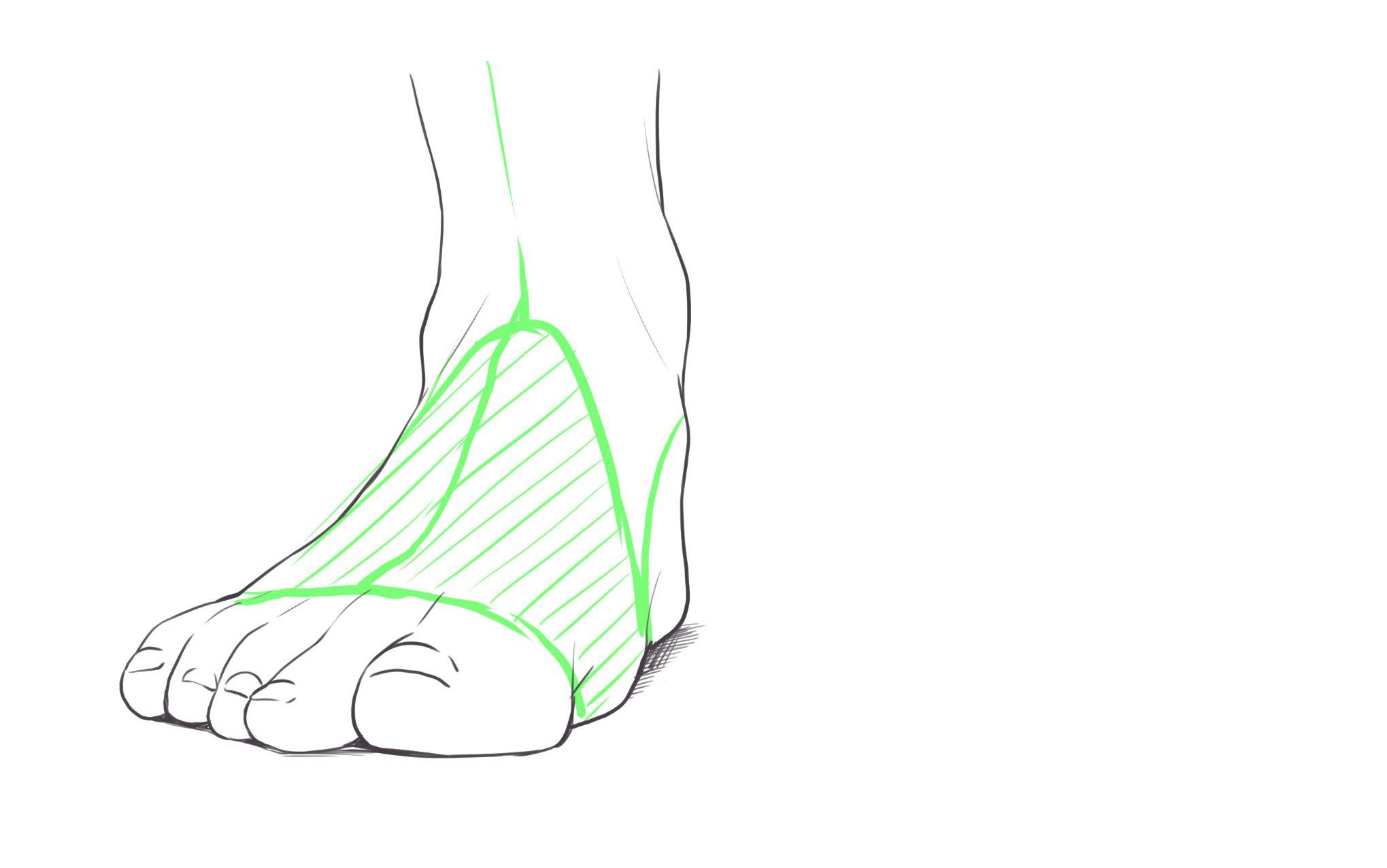 正面から見た足の甲